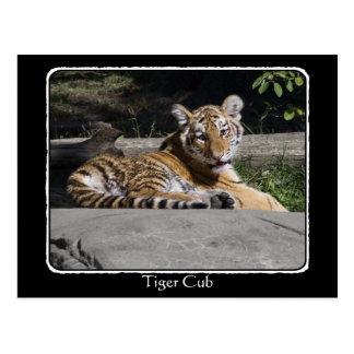 Tiger Cub on the Rocks with border Postcard