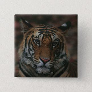 Tiger Cub Pinback Button