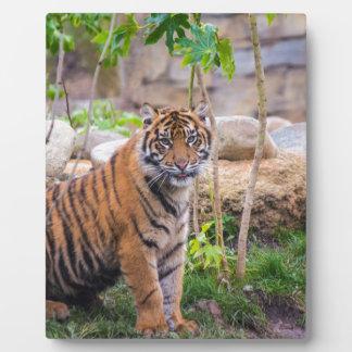 Tiger cub plaque