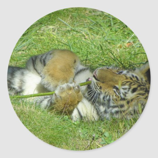 Tiger Cub Playing With a Stick Classic Round Sticker