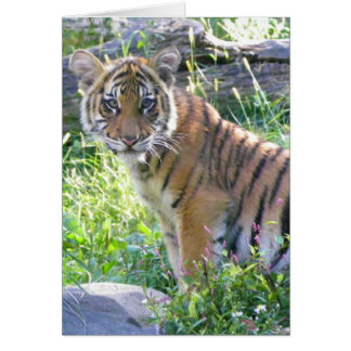Tiger Cub Portrait 2 Card