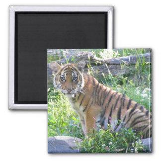 Tiger Cub Portrait 2 Magnet