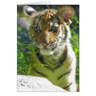 Tiger Cub Portrait 3 Card