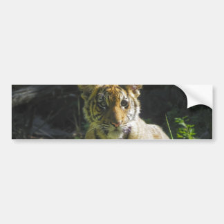 Tiger Cub Portrait 4 Bumper Sticker