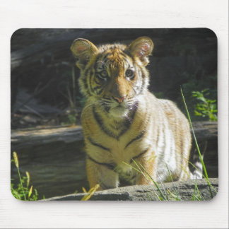 Tiger Cub Portrait 4 Mouse Pad