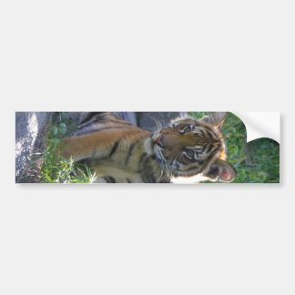 Tiger Cub Portrait Bumper Sticker