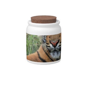 Tiger Cub Portrait Candy Jar