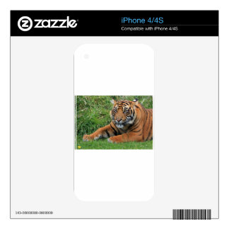 Tiger Cub Portrait Decals For The iPhone 4S