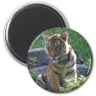 Tiger Cub Portrait Magnet