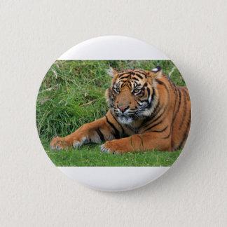 Tiger Cub Portrait Pinback Button