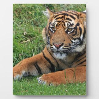 Tiger Cub Portrait Plaque