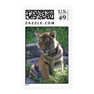 Tiger Cub Portrait Postage Stamps