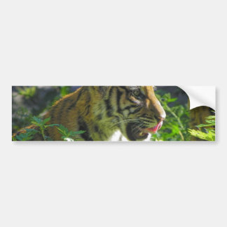 Tiger Cub Portrait Tongue Bumper Sticker