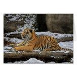 Tiger Cub Pose as Sphinx Greeting Card