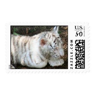 Tiger Cub Postage Stamp