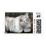 Tiger Cub Postage Stamp Postage Stamp