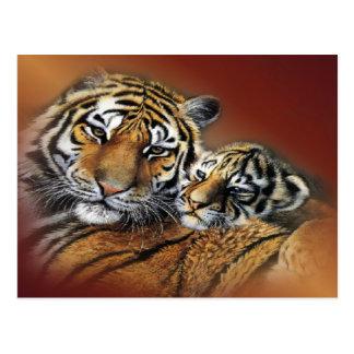 Tiger & Cub Postcard