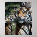 Tiger cub poster