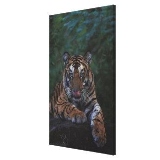 Tiger Cub Reclines on Rock Canvas Print
