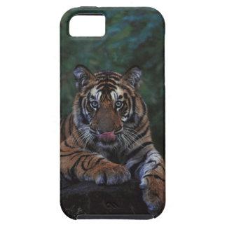 Tiger Cub Reclines on Rock iPhone SE/5/5s Case