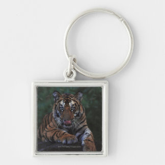 Tiger Cub Reclines on Rock Silver-Colored Square Keychain