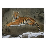 Tiger Cub Statuesque Greeting Card