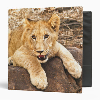 Tiger Cub Takes Breather On A Rock 3 Ring Binder
