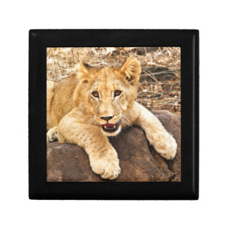 Tiger Cub Takes Breather On A Rock Jewelry Box