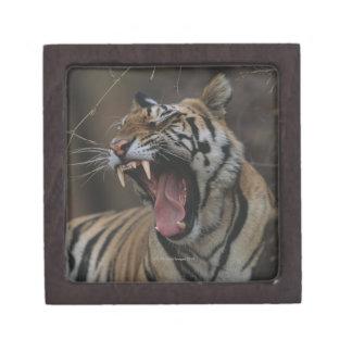 Tiger Cub Yawning Jewelry Box
