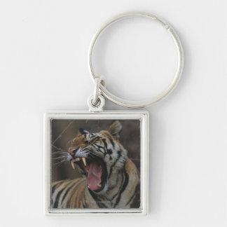 Tiger Cub Yawning Keychain