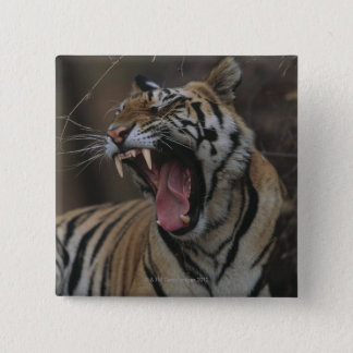 Tiger Cub Yawning Pinback Button