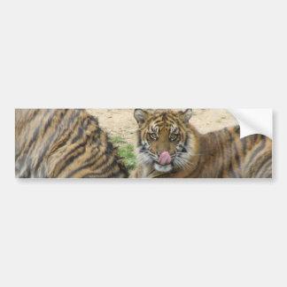 Tiger Cubs Bumper Sticker