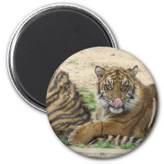 Tiger Cubs Magnet Refrigerator Magnets