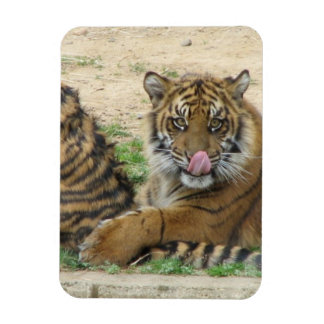 Tiger Cubs Premium Magnet Flexible Magnet