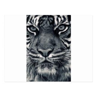tiger design postcard