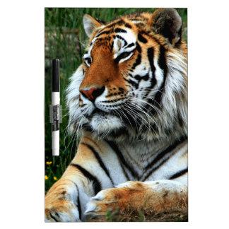 Tiger Dry-Erase Board