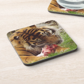 Tiger Eating His Meat Real Photo Beverage Coaster