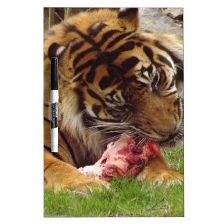 Tiger Eating His Meat Real Photo Dry-Erase Board