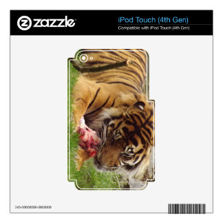 Tiger Eating His Meat Real Photo iPod Touch 4G Skins