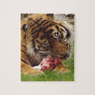 Tiger Eating His Meat Real Photo Jigsaw Puzzle