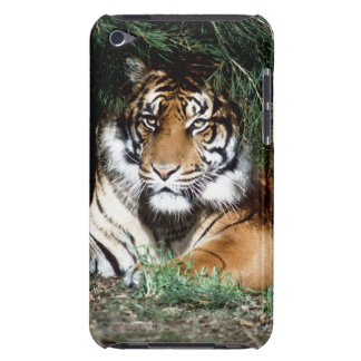 Tiger Enjoying Shade Barely There iPod Covers