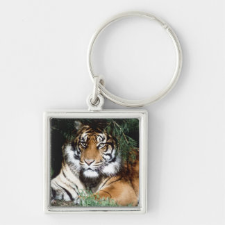 Tiger Enjoying Shade Silver-Colored Square Keychain