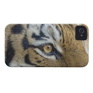 Tiger Eye Close-up Case-Mate iPhone 4 Case