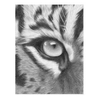 Tiger eye - pencil drawing postcard