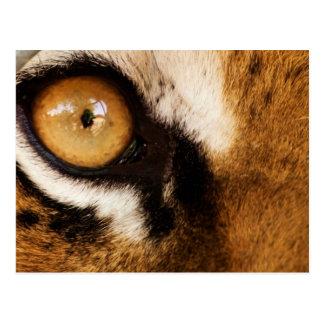 Tiger Eye - Postcard