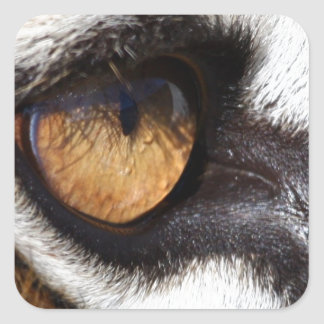 Tiger Eye Square Stickers