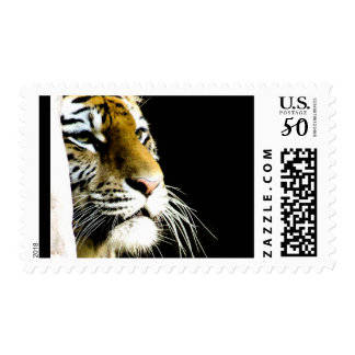 Tiger Eyes Postage