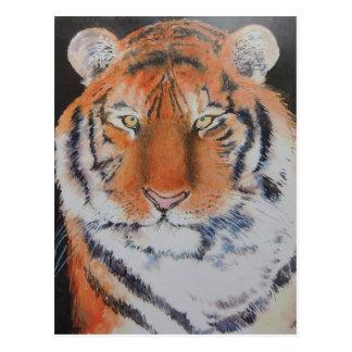 Tiger Eyes Postcard