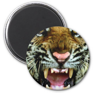 tiger face 2 inch round magnet