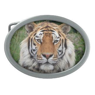 Tiger face beautiful photo belt buckle